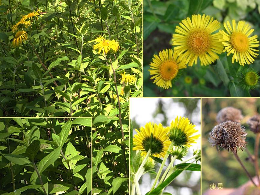 野山の草花・木々の花」植物検索...